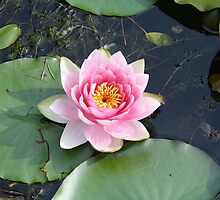 Waterlily 2012 by Lorna81