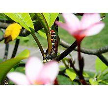Caterpillar plant Photographic Print