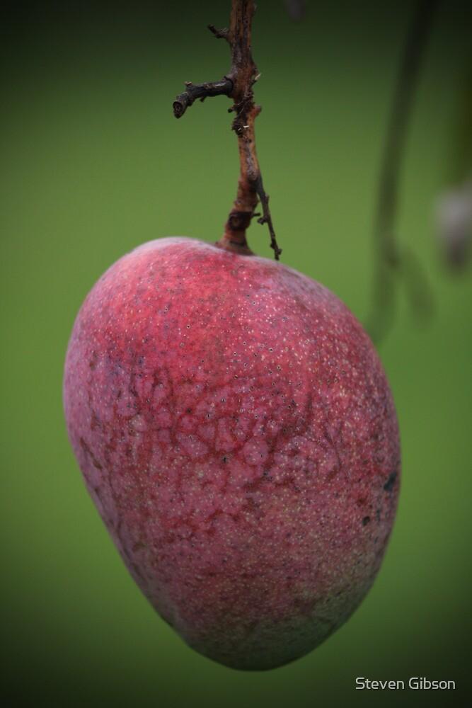 Mango by Steven Gibson