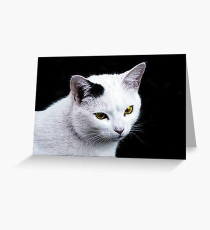 Cat Portrait VRS2 Greeting Card