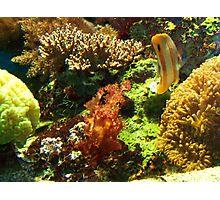 Underwater Photographic Print