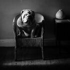 .bulldog. by NjDR