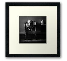 .bulldog. Framed Print