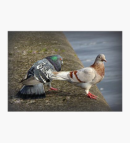 Cooing and Wooing. Photographic Print