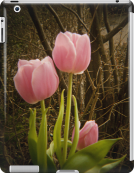 Pink Tulips by vivendulies