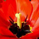 spring dance by studenna