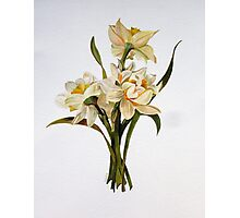 Double Narcissi Photographic Print