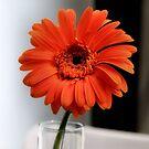 Orange by SuddenJim