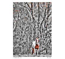 Horse Stare Photographic Print