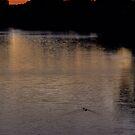 Murrumbidgee Sunrise by Mark Cooper