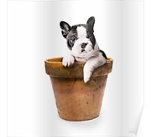 Potted Pooch Poster