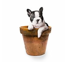 Potted Pooch Photographic Print
