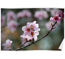 Springtime Peach Blossoms Poster