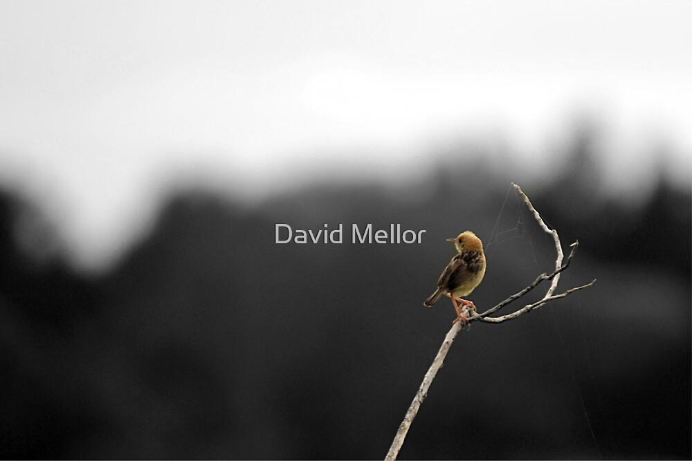 W e t l a n d s, S u n d a y 7: 0 0 a m by David Mellor