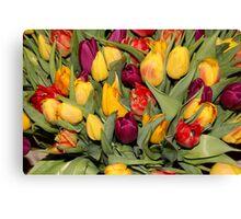 An Ocean Full Of Tulips  Canvas Print