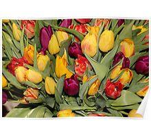 An Ocean Full Of Tulips  Poster
