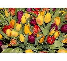 An Ocean Full Of Tulips  Photographic Print