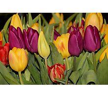 An Ocean Full Of Tulips III Photographic Print