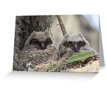 Baby Great Horned Owls Greeting Card