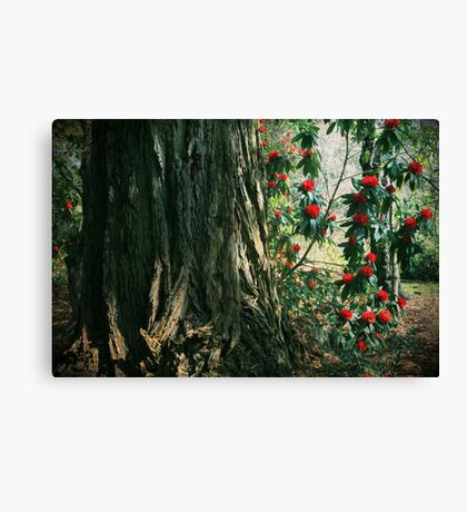 Sometimes Life is Sweet Canvas Print