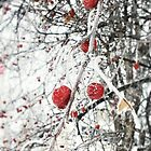 Frozen Berries by jessyca