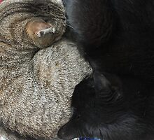 Yin and Yang (Cat style) by Stephen Thomas