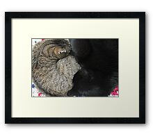 Yin and Yang (Cat style) Framed Print