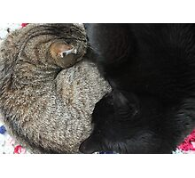 Yin and Yang (Cat style) Photographic Print