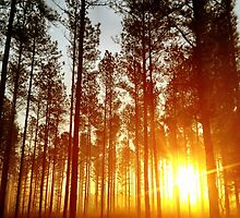 Sun In The Pines by doycave