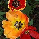 Floral Flame by Joe Bledsoe