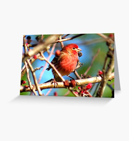 feathered friend comes to see me! Greeting Card