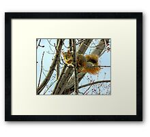 You Talkin' To Me? Framed Print