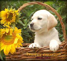 Sunflower! by DennisThornton