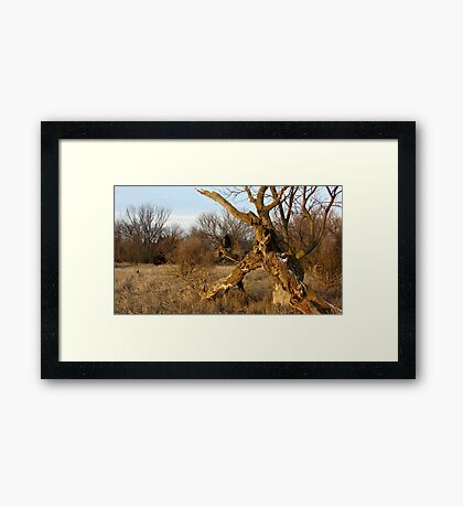 Gnarley Farm Framed Print