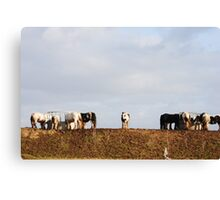 Ponies by the Riverside Canvas Print