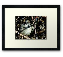 Sparrow Hiding Framed Print