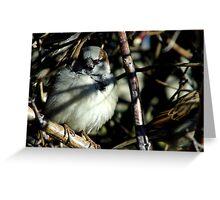 Sparrow Hiding Greeting Card