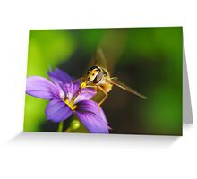 Hover Fly Harvesting Nectar Greeting Card