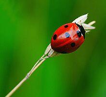 Ladybird, Ladybird by Kay1eigh