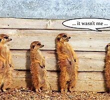 """Meerkats - """"It Wasn't Me"""" by Kay1eigh"""