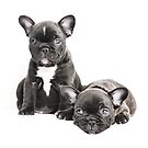 Two Frenchies by Andrew Bret Wallis