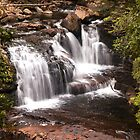 D'Alton Falls - Overland Track Tasmania Australi by Ron Finkel