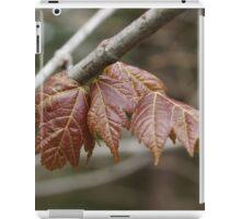 Spring maple iPad Case/Skin