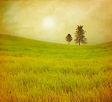 Trees & shining field by VivianaPhotoArt