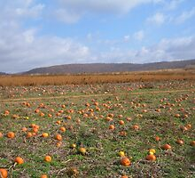 Pumpkin Patch by Kimberly Scott