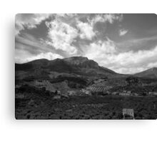 Olive Groves Canvas Print