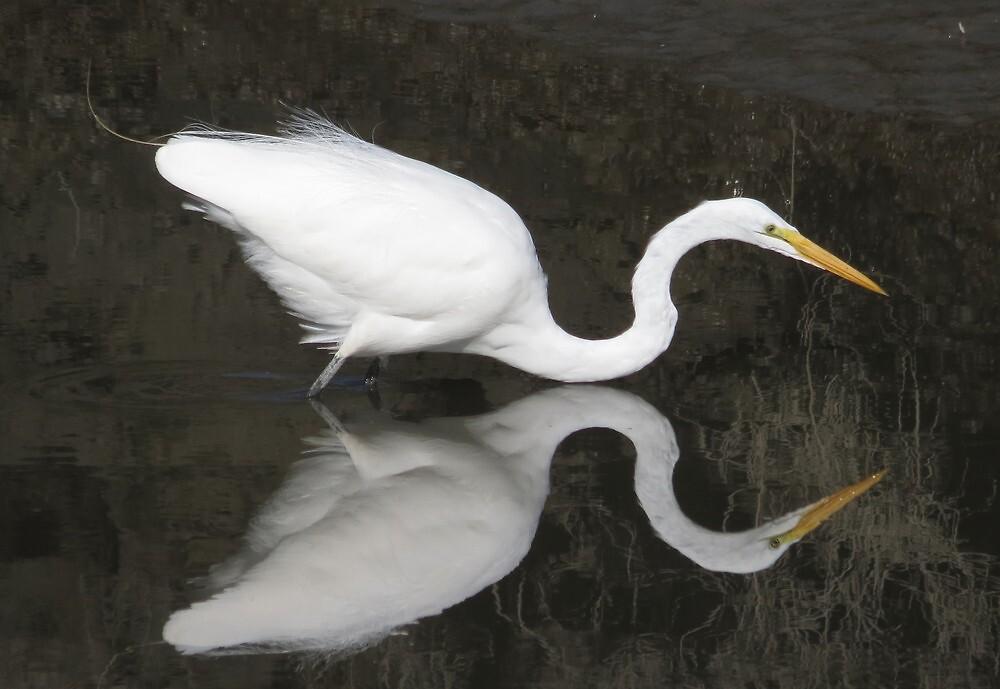 Great Egret Lake Ballet by Alex Call
