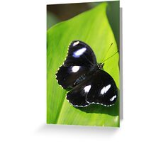 Black & White Butterfly Greeting Card