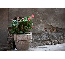 Begonias In the Alley Photographic Print