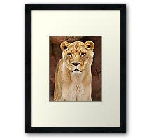 African Lion Dry Brush Framed Print